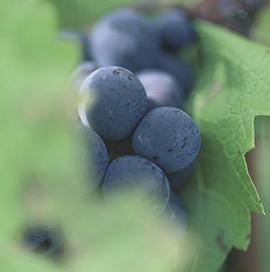 Bordeaux mixture