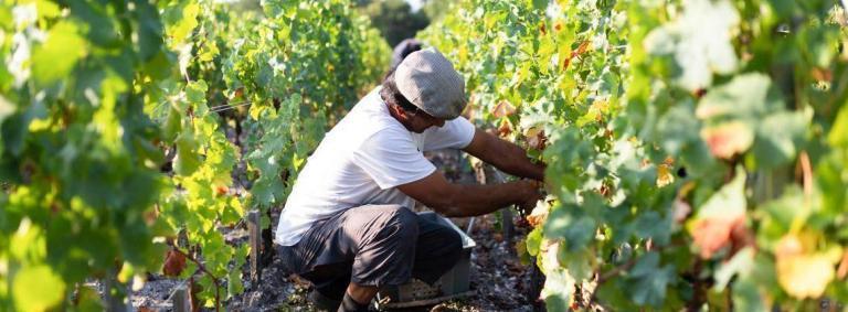Bordeaux's Harvest Manual