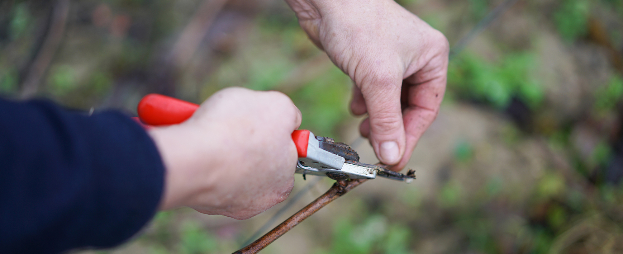 The secrets of pruning revealed