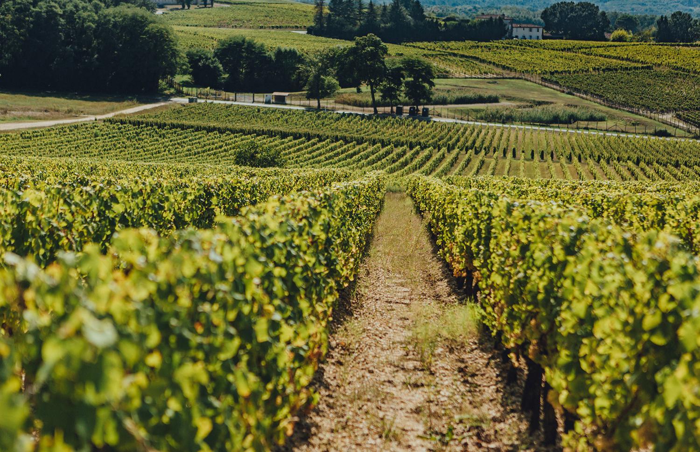 Bordeauxwein: Appellationen für Anfänger