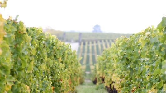Wijnmaker voor een weekend
